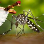 Lutte contre le moustique tigre: 3 Canadairs attendus dans le Doubs