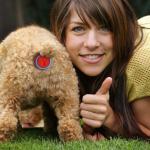 Déjections canines: à Besançon, le plug anal pour chien devient obligatoire sur la voie publique