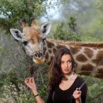 Besançon: une girafe du zoo de la Citadelle grièvement blessée par une perche à selfie