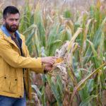 Haute-Saône: un agriculteur porte plainte après avoir retrouvé de l'urine dans un bidon de glyphosate