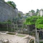 Zoo de Besançon: l'enclos des moustiques-tigres retrouvé vide ce matin