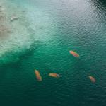 Baisse de la pollution : des saucisses de Morteau sauvages de retour dans le Doubs
